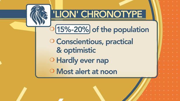 Chronotype bear