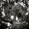 060-concepcion-munoz-trees-2nd-wm.jpg