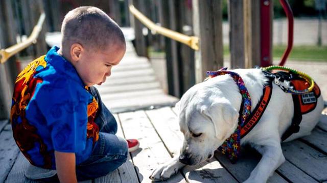 1011-cbsn-autisticboyservicedog-1147317-640x360.jpg