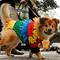 halloween-dog-parade-nyc-s1aeuinbzdaa-rtrmadp.jpg