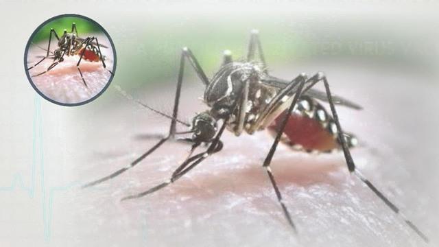 1112-cbsn-akw-zika-vaccine-human-1179252-640x360.jpg