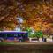 campus-trees.jpg