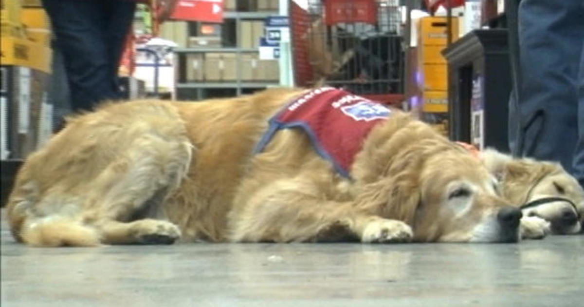 Lowe's hires a veteran and his service dog - CBS News
