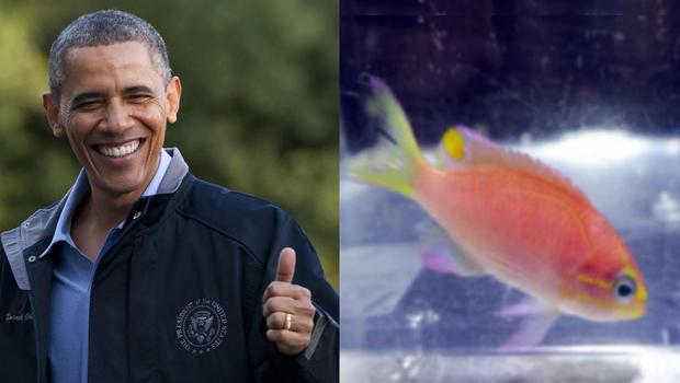 obama-fish-split.jpg