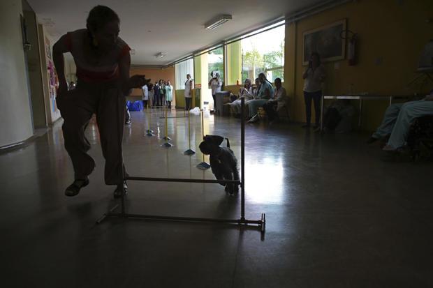 brazilian-therapy-dogs-2016-12-30.jpg