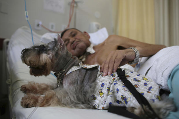 brazilian-therapy-dogs-4-2016-12-30.jpg