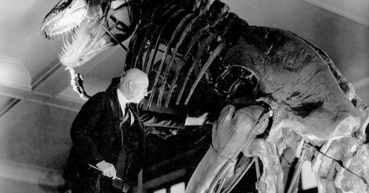 1200 x 630 jpeg 88kBTyrannosaurus