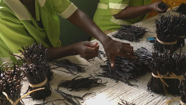 Vanilla bean shortage in Madagascar drives up prices in U S