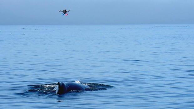 phillips-antarctica-killer-whales-frame-4164.jpg