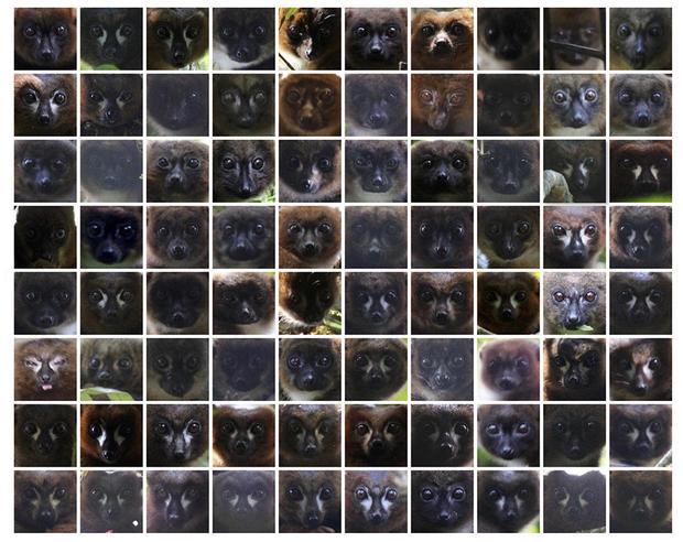 lemur-facial-recognition-01-face-collage.jpg