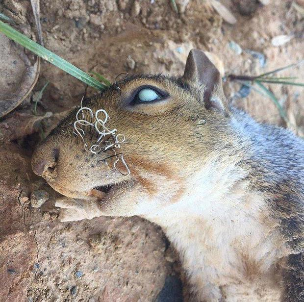 squirrel-kristin-hugo-at-strangebiodotcom.jpg