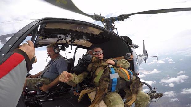 patta-skydiving-dogs-2017-3-9.jpg