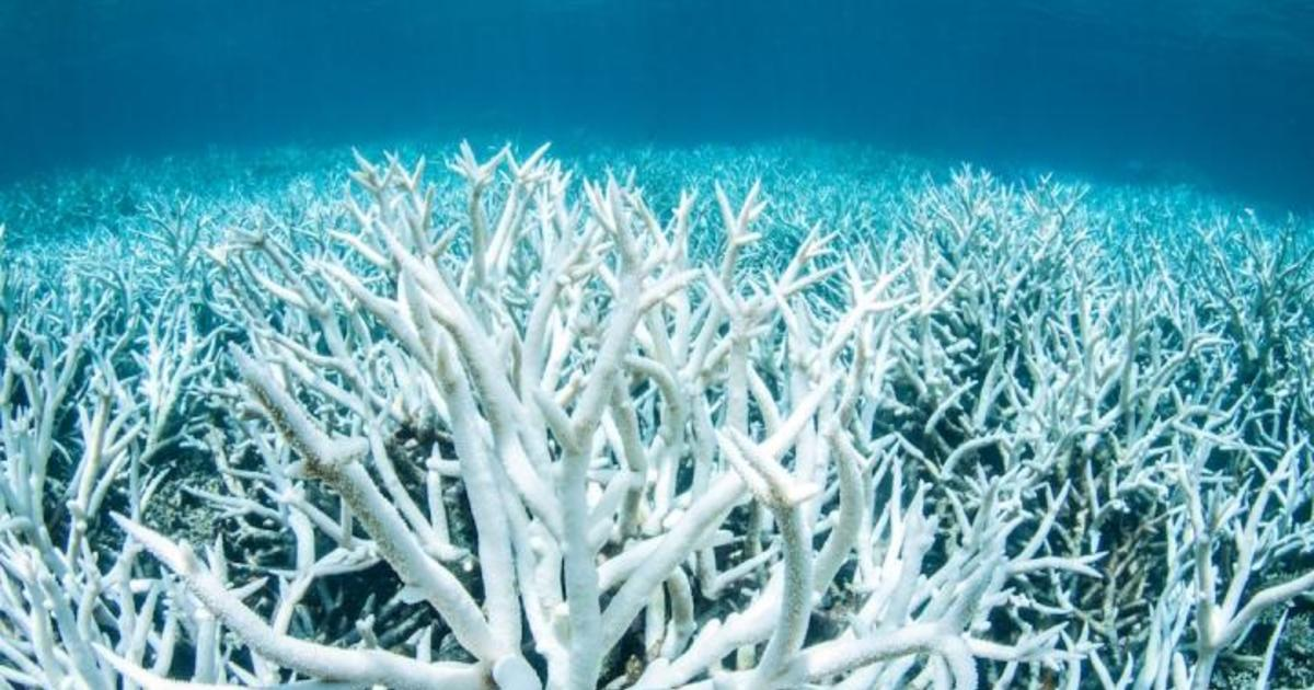 Great Barrier Reef Dying Climate Change Has Caused 89