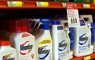 Monsanto accused of trying to hide weed killer Roundup's danger