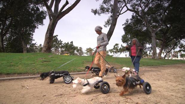 tracy-wheelchair-dogs-newspath5.jpg