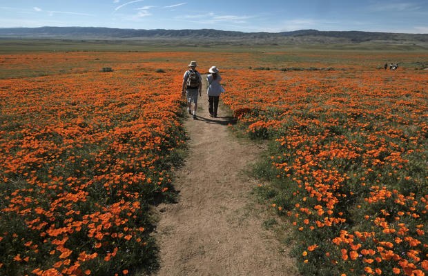 Lancaster, California - Super bloom: Spectacular spring flowers of 2017 - Pictures - CBS News