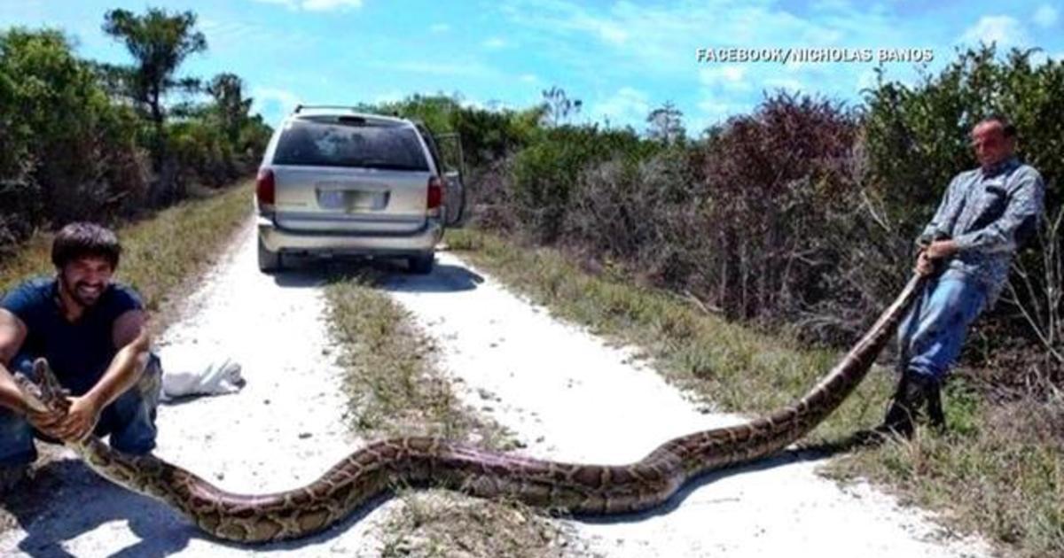 python snake logo