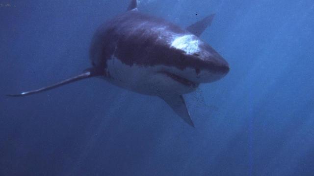 shark-cape-town.jpg