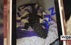 dead-gator-florida.jpg