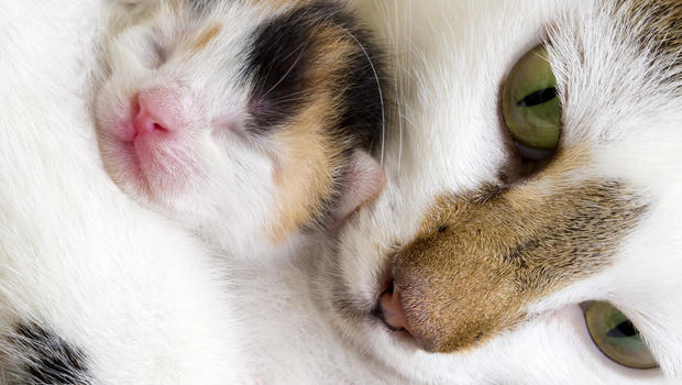 Is It Selective Hearing, or Is Your Cat Really Ignores You?