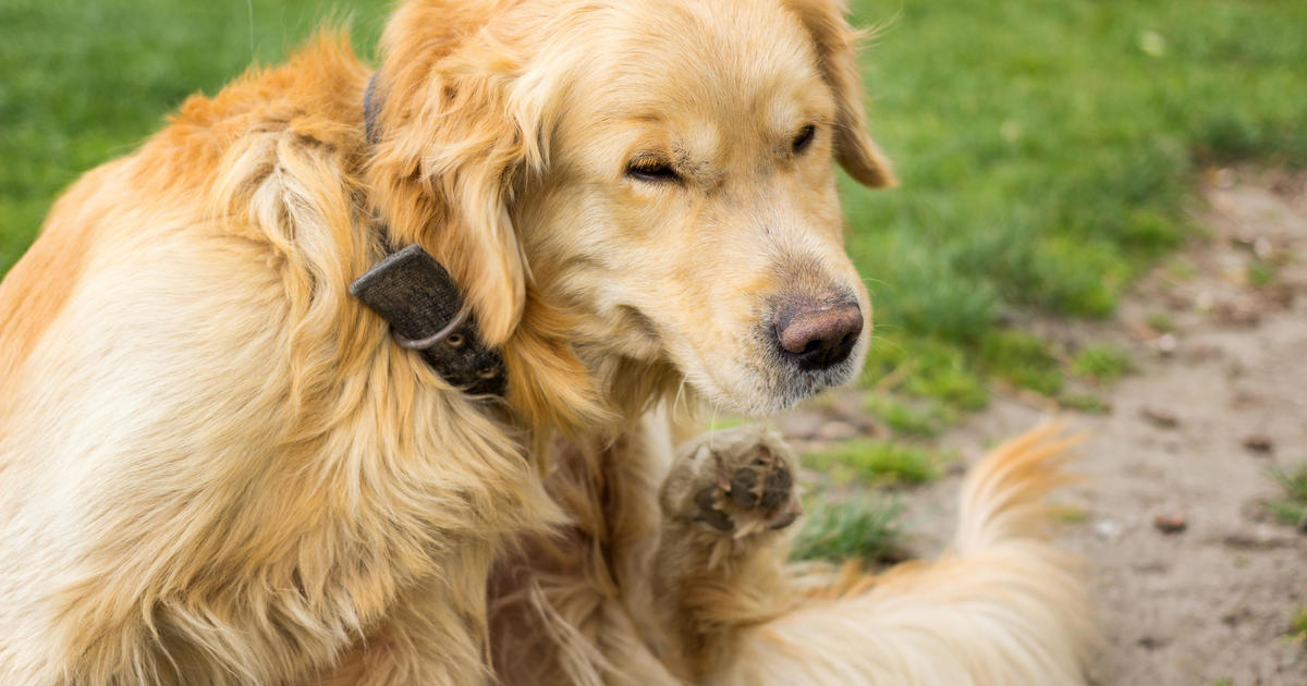 Lyme disease in dogs: What you need to know