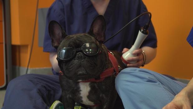 laser-therapy-thumb.jpg