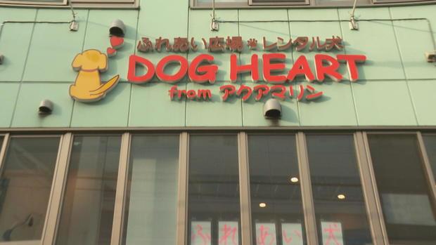 dog-heart.jpg