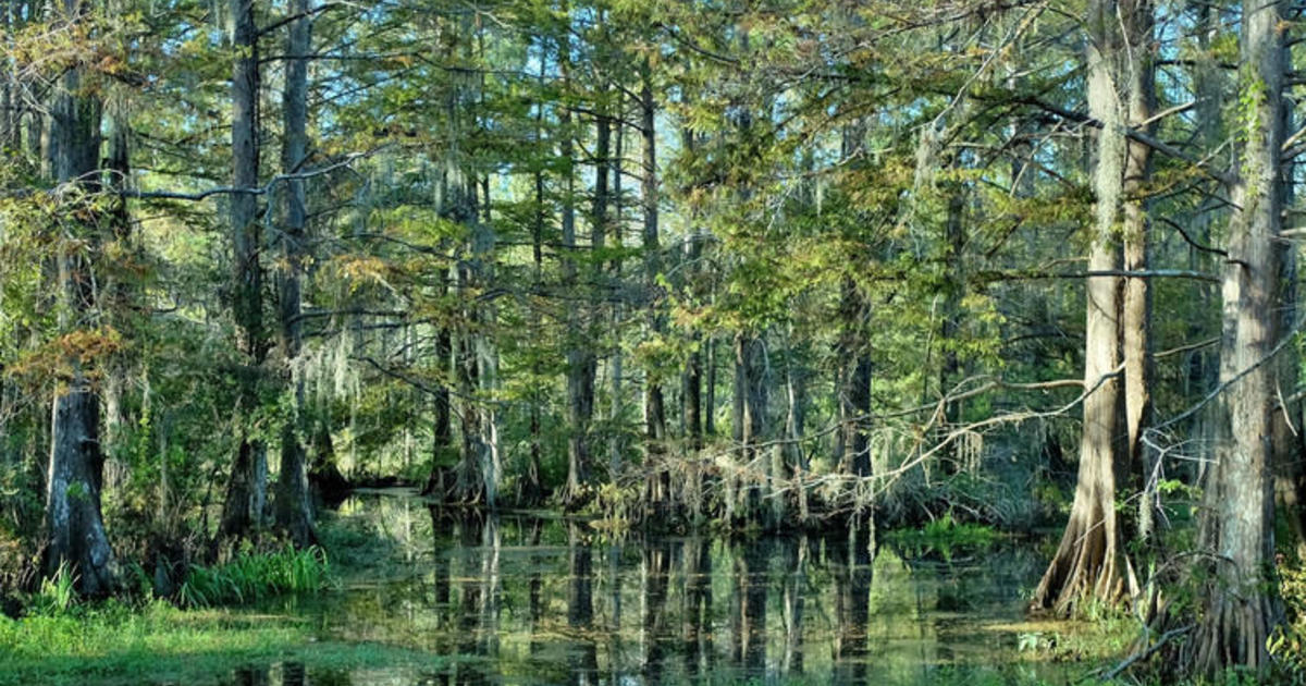 How U S Forests Could Do More To Curb Climate Change