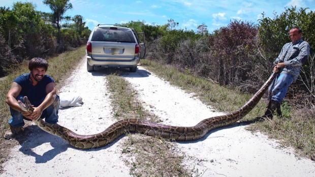 python-two-guys.jpg