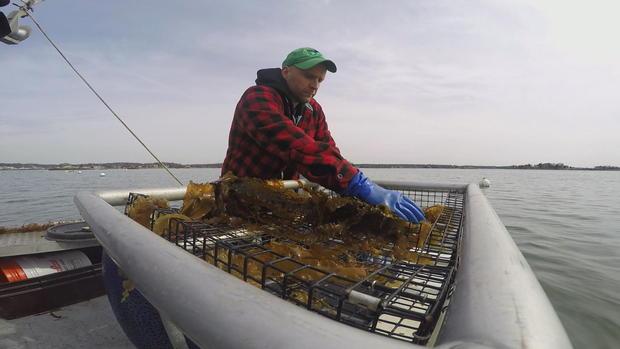 kelp-farmer-1.jpg