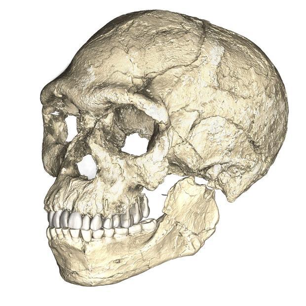 fossil-skull.jpg