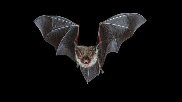 U.S. bats in deep peril