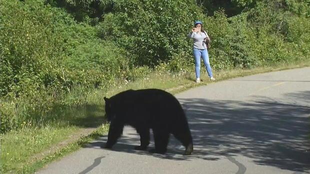 woman-takes-pic-of-bear.jpg
