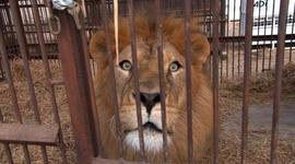 In God's Name, Saving the Lions, The Music of Zomba Prison