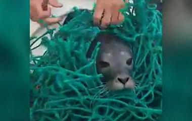 Viral video shows rescue of seal pup