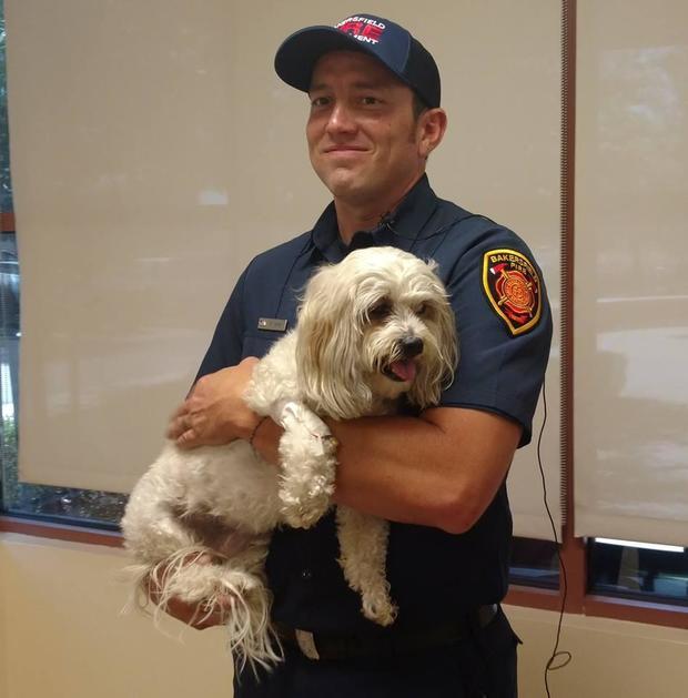 bakersfield-fire-department-dog-2017-7-21.jpg