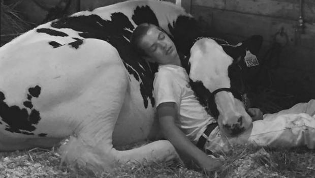 170815-facebook-miner-cow-horizontal.jpg