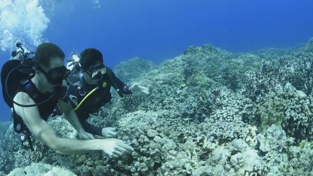 ctm-0817-hawaii-coral-reef-sunscreen-2.jpg