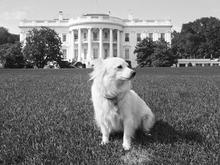 Kennedy Dog Pushinka
