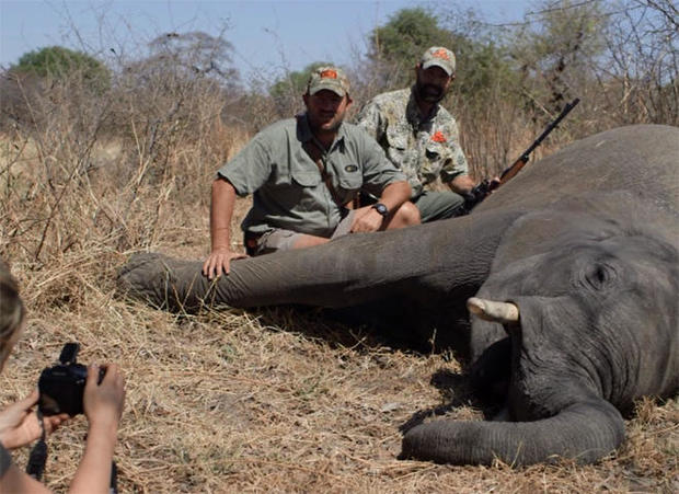 trophy-elephant-hunt.jpg
