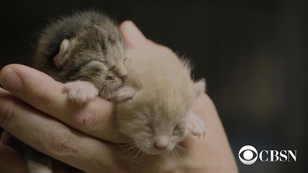 newbornkittens.jpg