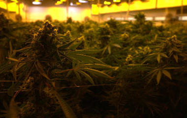 Big Pot: The commercial takeover