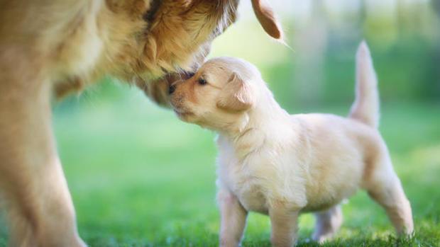 dog-puppy-istockphoto-1412446-640x360.jpg