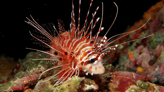15 creatures that could disappear with the Great Barrier Reef