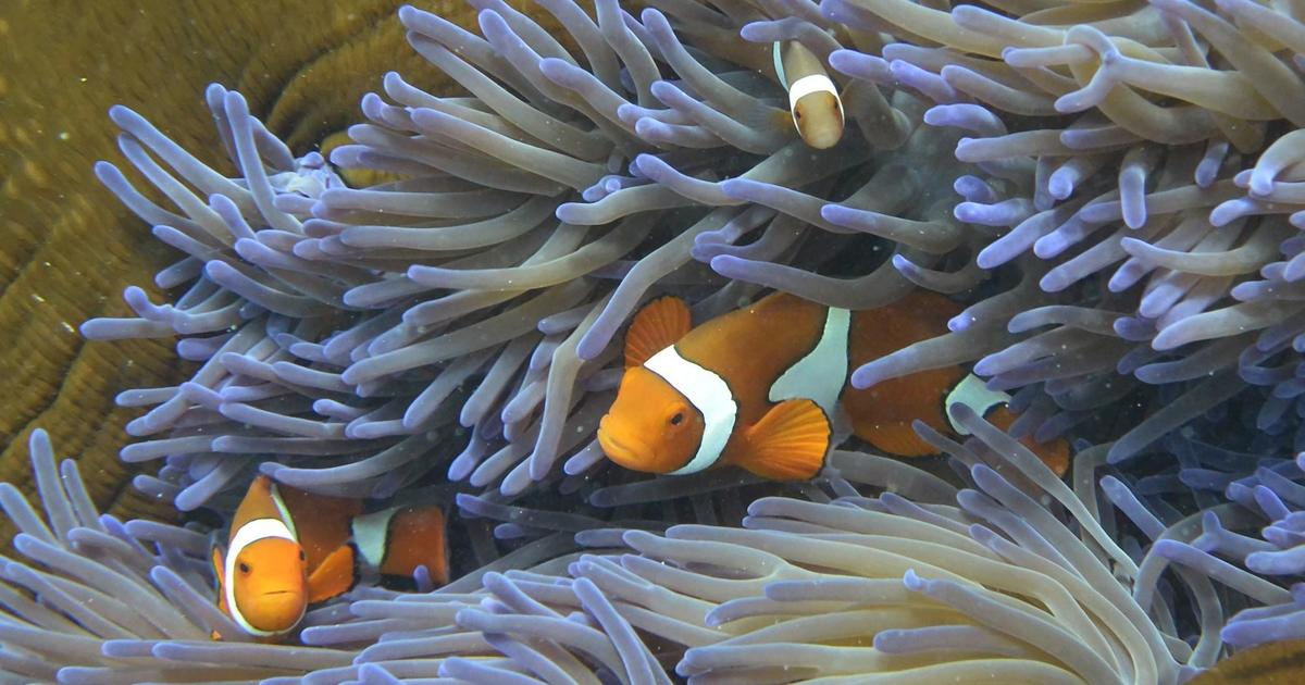 Climate change could wipe out all coral reef habitat within decades, scientists warn