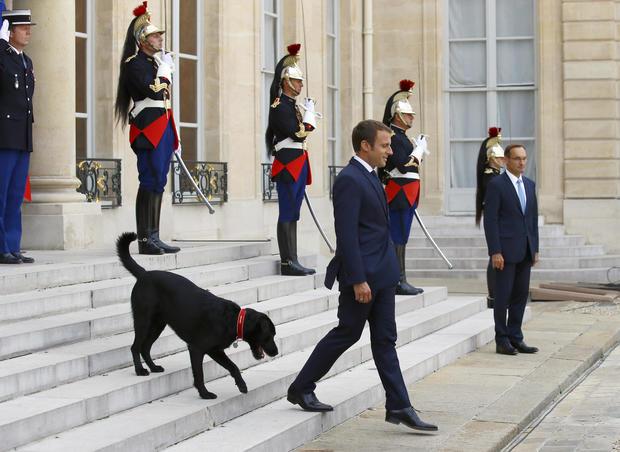 France Macron's Dog