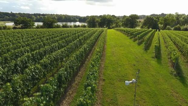 ctm-1103-queen-elizabeth-vineyard.jpg