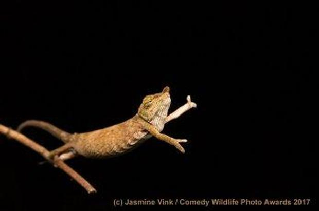 Hilarious finalists of the 2017 Comedy Wildlife Photography Awards