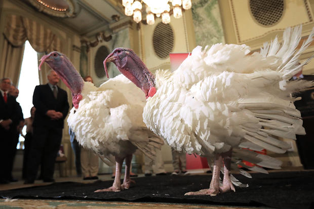 National Thanksgiving Turkey Meets The Press Ahead Of Presidential Pardoning