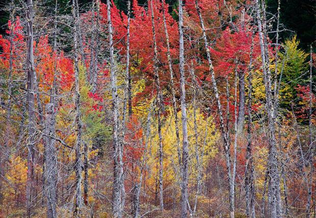 scot-miller-maine-woods-620.jpg